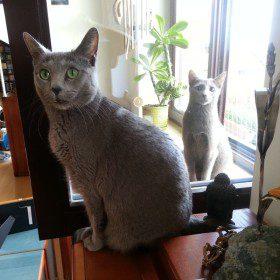 Kot w szafie