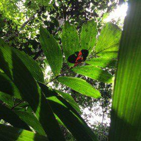 Wyprawa do dżungli amazońskiej