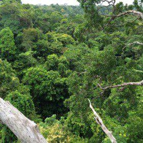 Wyprawa do dżungli amazońskiej 2015