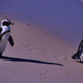 O pingwinach i o ludziach