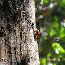 Wyprawa do dżungli amazońskiej w październiku i listopadzie 2016