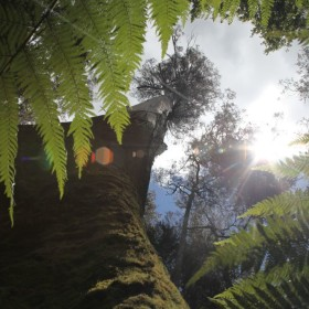 W paprociowym lesie