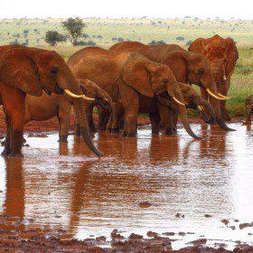 Wyprawa do Botswany i Zimbabwe