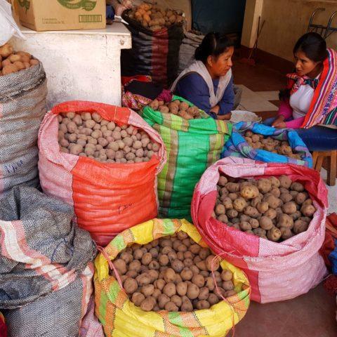 W Peru jest 3000 odmian ziemniakow,  fot. Beata Pawlikowska
