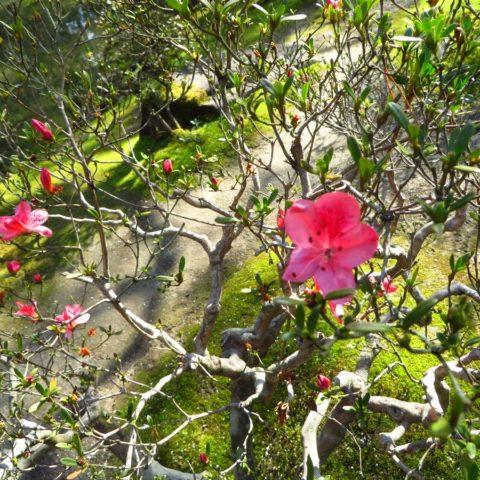 W japońskim ogrodzie, fot. Beata Pawlikowska