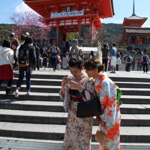 Kyoto - miasto tysiąca świątyń, W parku kwitnących wiśni, fot. Beata Pawlikowska