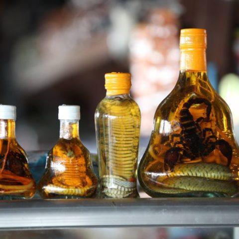 Alkohol z wężem, fot. Beata Pawlikowska