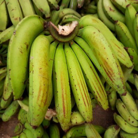Banany warzywne, fot. Beata Pawlikowska