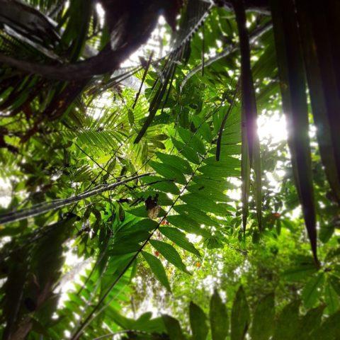 W dżungli, fot. Beata Pawlikowska