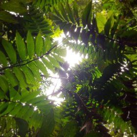 Wyprawa do dżungli amazońskiej z warsztatami zdrowego życia