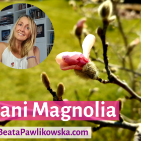 Pani Magnolia