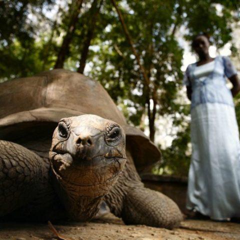 Ponad stuletni żółw olbrzymi, Zanzibar,  fot. Beata Pawlikowska