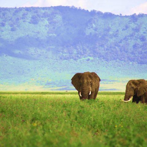 Słonie w kraterze Ngorongoro w Tanzanii,  fot. Beata Pawlikowska