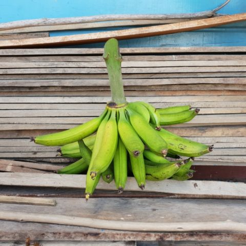 Jedna z wielu różnych odmian bananów, Kolumbia