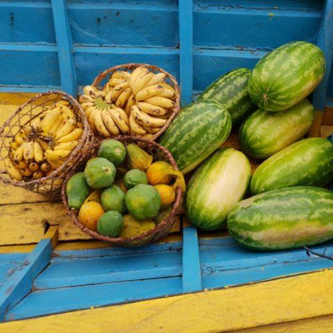 Zapas owoców przygotowany na czas wyprawy do dżungli – banany, papaje i arbuzy