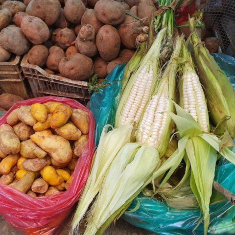 Andyjska kukurydza i ziemniaki – podstawa inkaskiej kuchni. Fot. Beata Pawlikowska