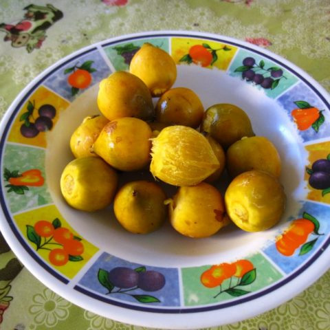 Pupuña, owoc palmowy, niejadalny na surowo, po ugotowaniu w smaku przypomina ziemniaki, Wenezuela.