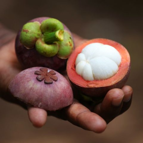 Mangostan, uważany za jeden z najsmaczniejszych owoców świata, o delikatnym, orzeźwiającym miąższu w smaku trochę podobny do truskawek, Zanzibar.