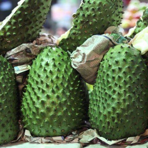 Guanabana, po polsku zwana flaszowcem (łac. Annona muricata), owoc o wyjątkowych właściwościach antyoksydacyjnych. Niektóre badania potwierdzają, że guanabana hamuje wzrost komórek nowotworowych.