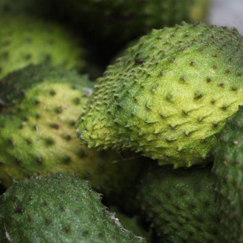 Guanabana, flaszowiec. Pod zieloną skórką kryje się miękki, kremowy, biały miąższ o delikatnym smaku