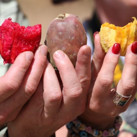 Owoce opuncji, Boliwia
